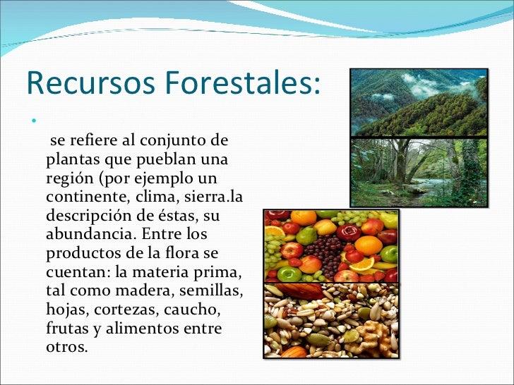 Recursos naturales diapositiva ultimo toq for Tipos de plantas forestales
