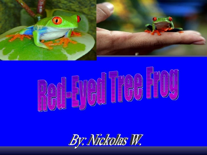 By: Nickolas W.  Red-Eyed Tree Frog
