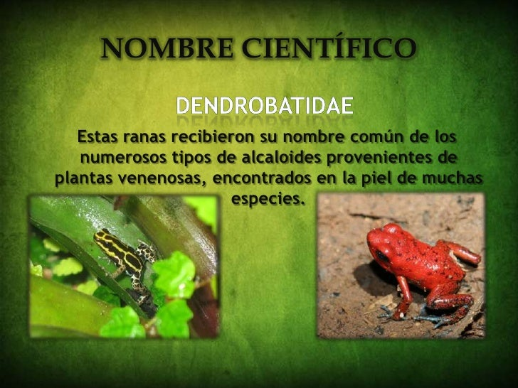 Redaccion for Nombres de plantas venenosas