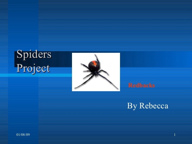 Spiders Project    By Rebecca  01/08/09 Redbacks