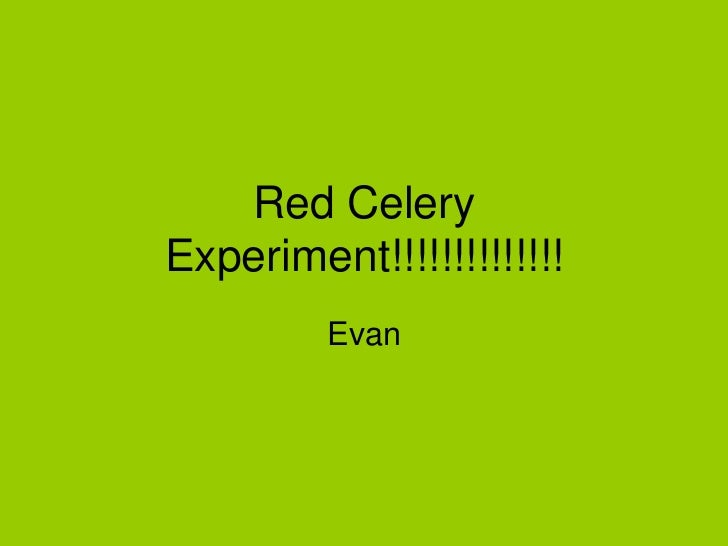 Red Celery Experiment!!!!!!!!!!!!!!<br />Evan <br />