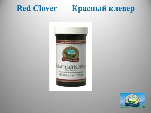 Красный клевер в лечении от сахарного диабета