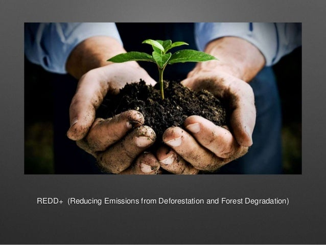 REDD+ (Reducing Emissions from Deforestation and Forest Degradation)