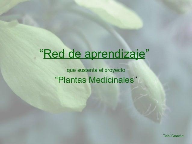 """""""Red de aprendizaje"""" que sustenta el proyecto """"Plantas Medicinales"""" Trini Cedrón"""