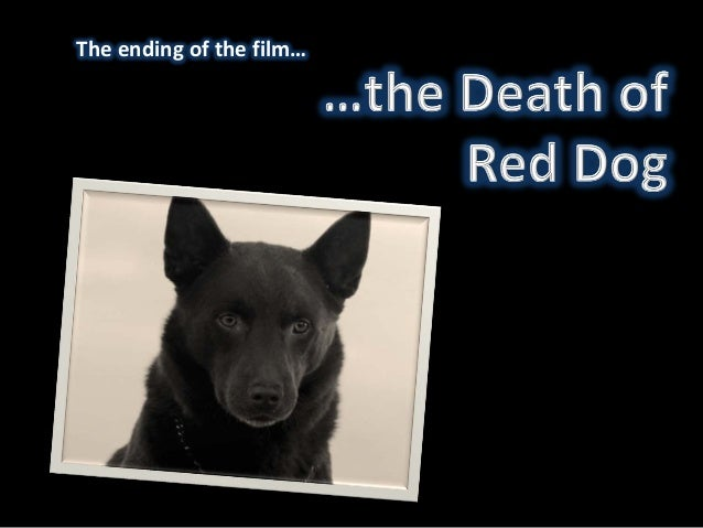 red dog death scene deconstruction the ending of the film