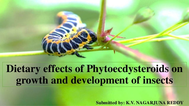 Dietary effects of Phytoecdysteroids on growth and development of insects Submitted by: K.V. NAGARJUNA REDDY