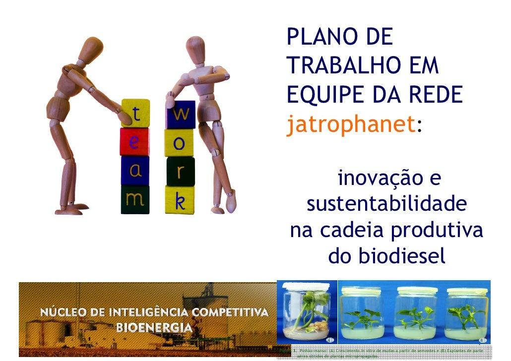 PLANO DE    TRABALHO EM    EQUIPE DA REDE    jatrophanet:            inovação e       sustentabilidade      na cadeia prod...