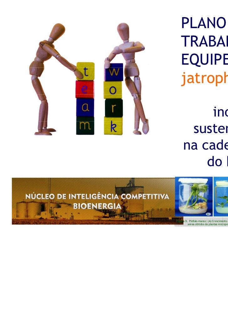 PLANO DE   TRABALHO EM   EQUIPE DA REDE   jatrophanet:          inovação e      sustentabilidade     na cadeia produtiva  ...