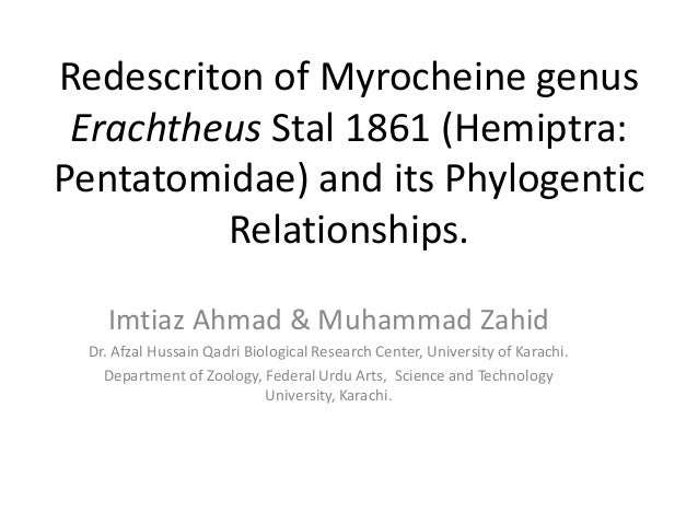 Redescriton of Myrocheine genusErachtheus Stal 1861 (Hemiptra:Pentatomidae) and its PhylogenticRelationships.Imtiaz Ahmad ...