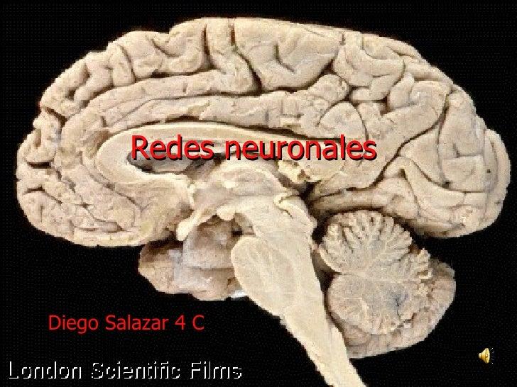Redes neuronales   Diego Salazar 4 C