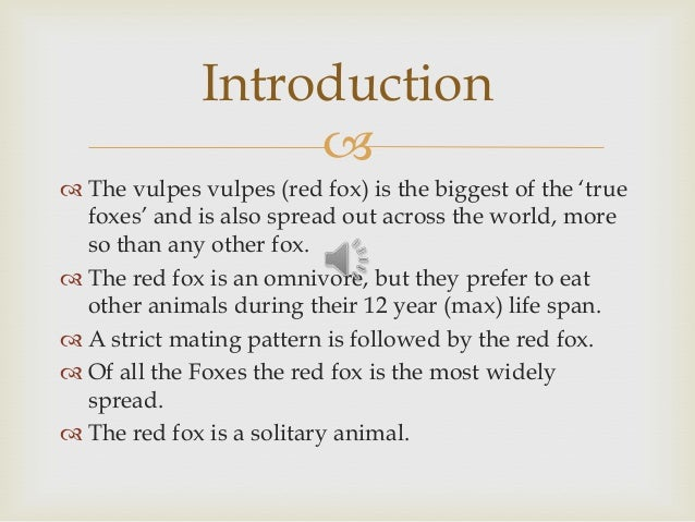   The vulpes vulpes (red fox) is the biggest of the 'true foxes' and is also spread out across the world, more so than a...