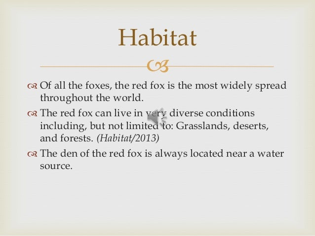   Of all the foxes, the red fox is the most widely spread throughout the world.  The red fox can live in very diverse c...