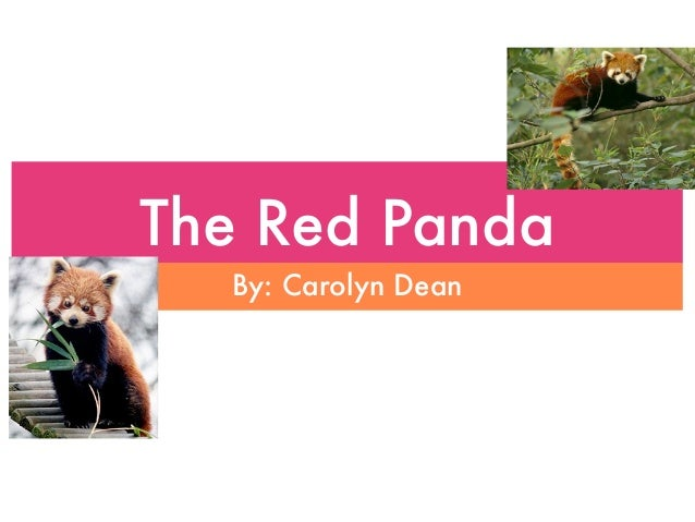 The Red Panda  By: Carolyn Dean