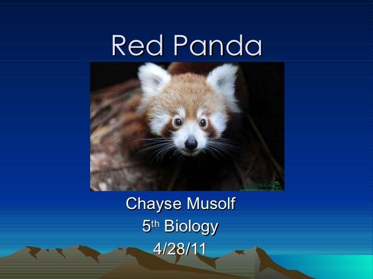 Red Panda Chayse Musolf 5 th  Biology 4/28/11