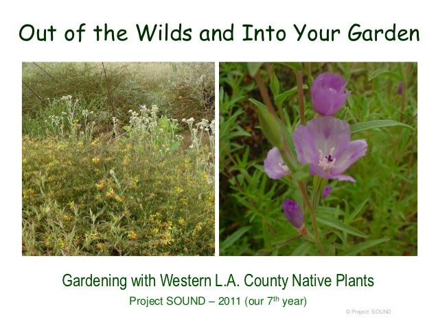 Out of the Wilds and Into Your Garden    Gardening with Western L.A. County Native Plants              Project SOUND – 201...