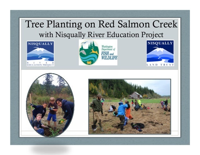 Tree Planting on Red Salmon Creek with Nisqually River Education Project