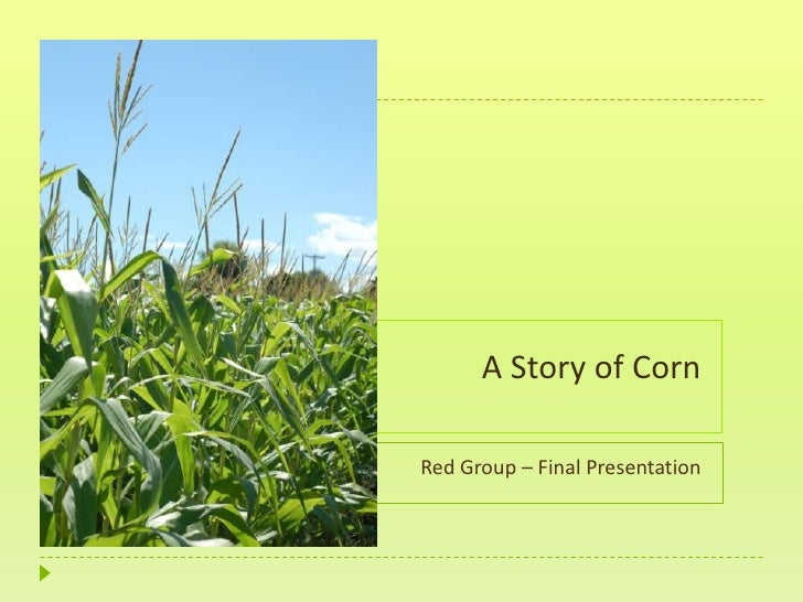 A Story of Corn<br />Red Group – Final Presentation<br />