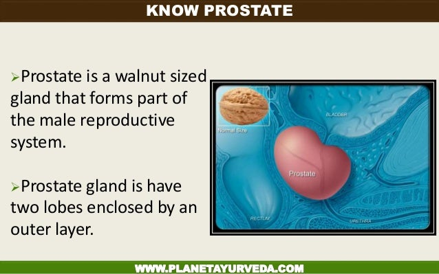 Prostate is a walnut sized gland that forms part of the male reproductive system. Prostate gland is have two lobes enclo...