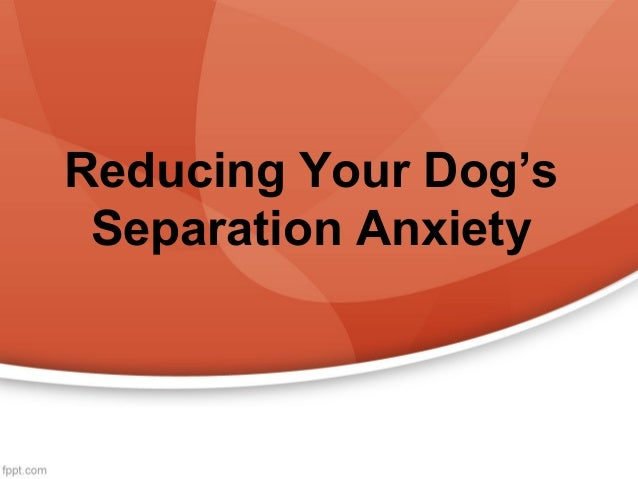 Reducing Your Dog's Separation Anxiety