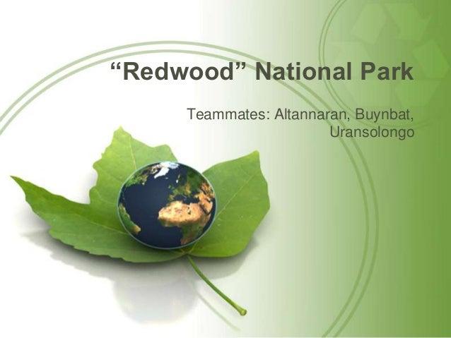 """Redwood"" National Park Teammates: Altannaran, Buynbat, Uransolongo"
