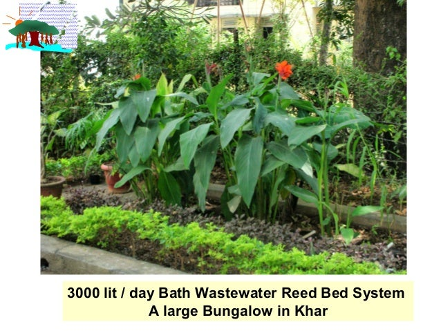 Reed Bed Water Solutions Lvk Ppt