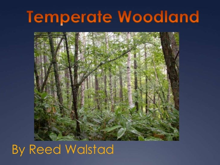 Temperate Woodland<br />By Reed Walstad<br />