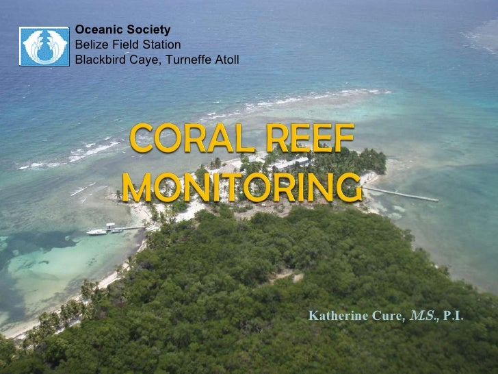 Oceanic Society Belize Field Station Blackbird Caye, Turneffe Atoll Katherine Cure,  M.S. , P.I.