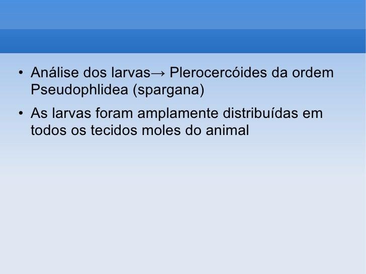 Clarificação de parasitas medicina tradicional