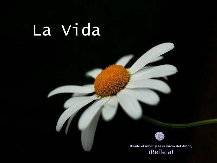 La Vida Desde el amor y al servicio del Amor, ¡Refleja!
