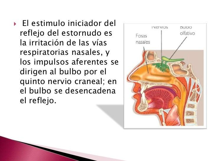 Reflejo del estornudo