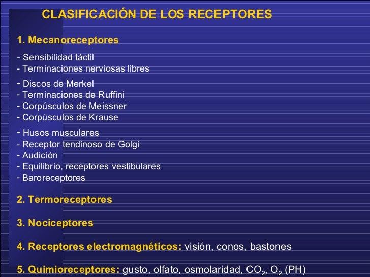 CLASIFICACIÓN DE LOS RECEPTORES   1. Mecanoreceptores  <ul><li>Sensibilidad táctil  </li></ul><ul><li>Terminaciones nervio...