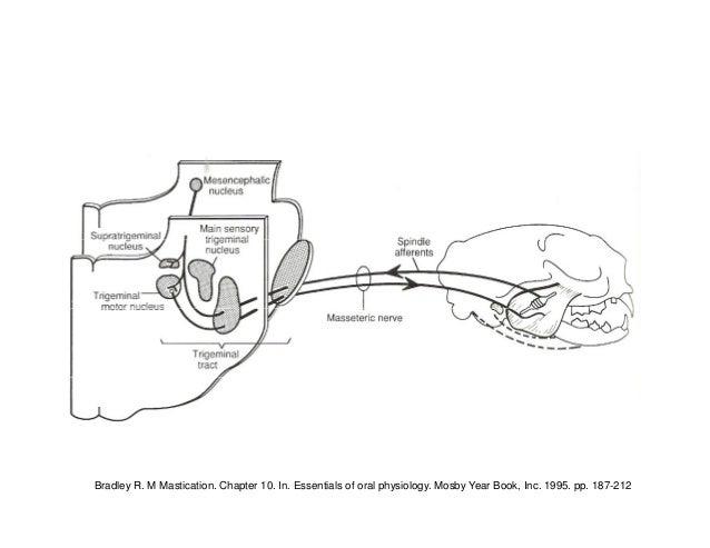 Reflejos y movimientos masticatorios