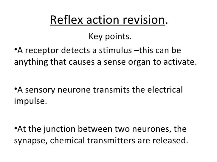 Reflex action revision . <ul><li>Key points. </li></ul><ul><li>A receptor detects a stimulus –this can be anything that ca...