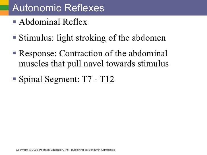 autonomic reflex arc