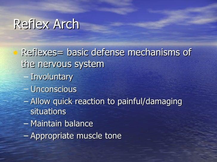 Reflex Arch <ul><li>Reflexes= basic defense mechanisms of the nervous system </li></ul><ul><ul><li>Involuntary </li></ul><...