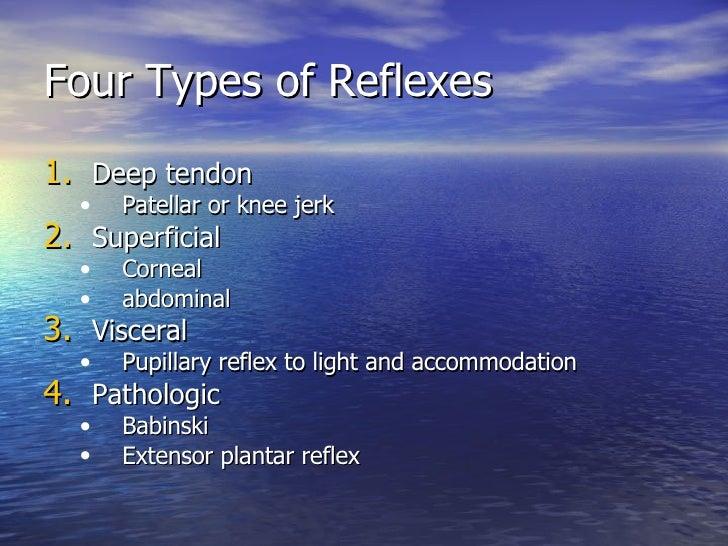 Four Types of Reflexes <ul><li>Deep tendon </li></ul><ul><ul><li>Patellar or knee jerk </li></ul></ul><ul><li>Superficial ...
