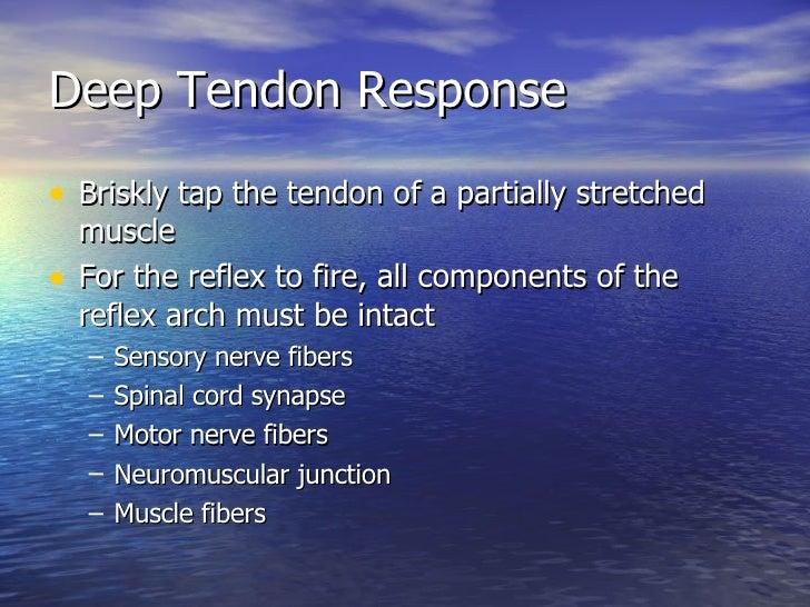 Deep Tendon Response <ul><li>Briskly tap the tendon of a partially stretched muscle </li></ul><ul><li>For the reflex to fi...