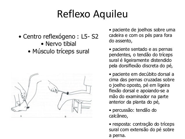 Musculos superficiais da facetronco e dos membros superiores e inferiores 10