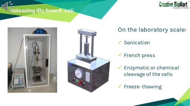 Releasing IBs from E. coli On the laboratory scale:  Sonication  French press  Enzymatic or chemical cleavage of the ce...