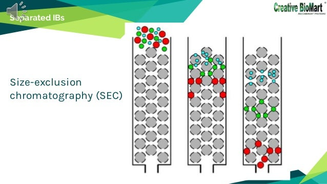 Separated IBs Size-exclusion chromatography (SEC)