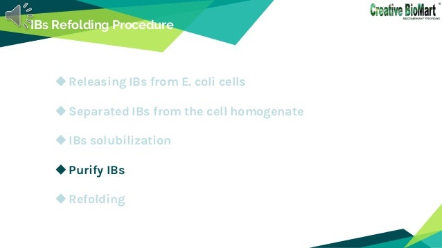 IBs Refolding Procedure Releasing IBs from E. coli cells Separated IBs from the cell homogenate IBs solubilization Pur...