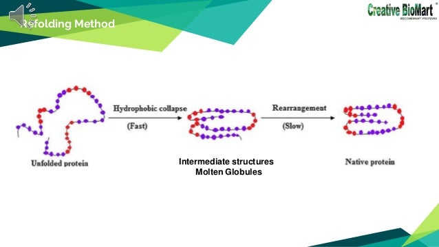 Refolding Method Intermediate structures Molten Globules