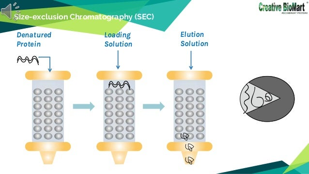 Size-exclusion Chromatography (SEC) Denatured Protein Loading Solution Elution Solution