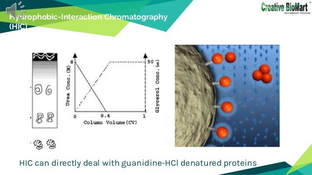 Hydrophobic-Interaction Chromatography (HIC) HIC can directly deal with guanidine-HCl denatured proteins