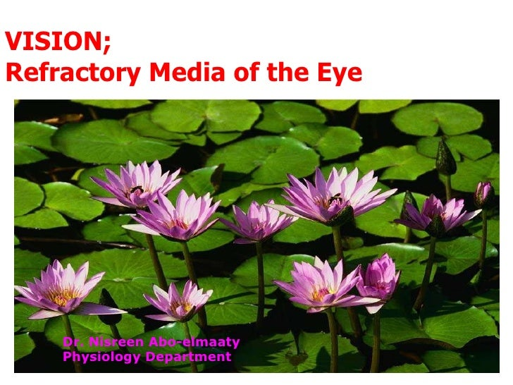 VISION; Refractory Media of the Eye Dr. Nisreen Abo-elmaaty Physiology Department