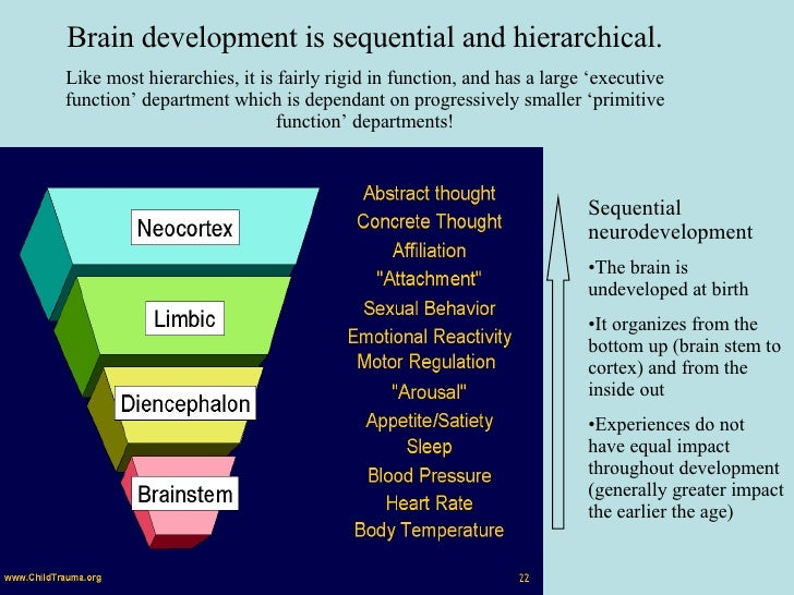 Brain development is sequential and hierarchical. Like most hierarchies, it is fairly rigid in function, and has a large '...