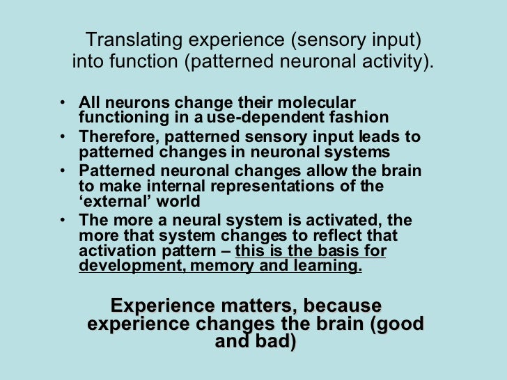 Translating experience (sensory input) into function (patterned neuronal activity). <ul><li>All neurons change their molec...