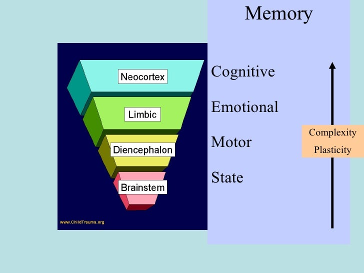 Memory Cognitive Emotional Motor State Complexity Plasticity