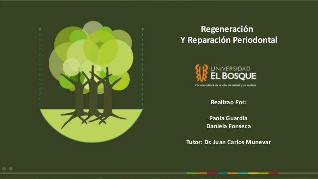 Realizao Por: Paola Guardia Daniela Fonseca Tutor: Dr. Juan Carlos Munevar Regeneración Y Reparación Periodontal