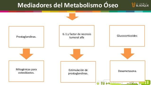 Introducción Objetivo Discutir los mecanismos moleculares que participan en la formación de progenitores osteoblásticos y ...